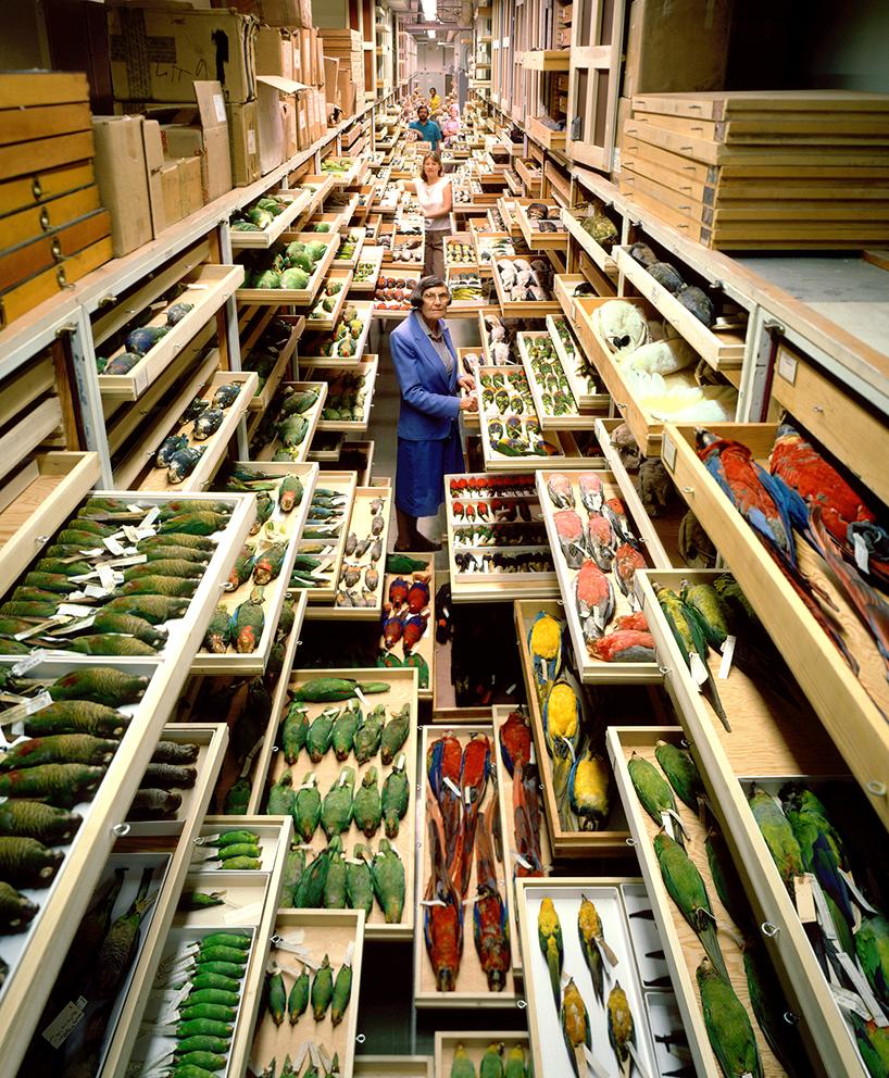 backroom-storage-at-the-smithsonian-natural-history-museum-designboom-01